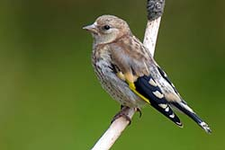 Actividades gratuitas para disfrutar de la naturaleza el Día Internacional de las Aves