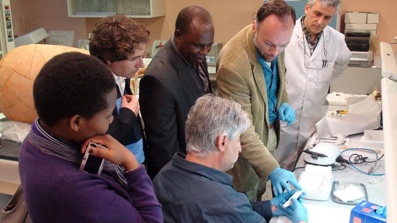 Los fósiles de Homo ergaster de Olduvai llegan al Museo Arqueológico Regional
