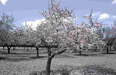 la quinta de los molinos floración almendros