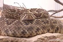 reptiles espaciomadrid