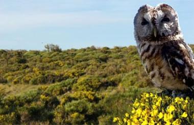 Natursierra te propone varias rutas guiadas gratuitas para conocer mejor la naturaleza que te rodea