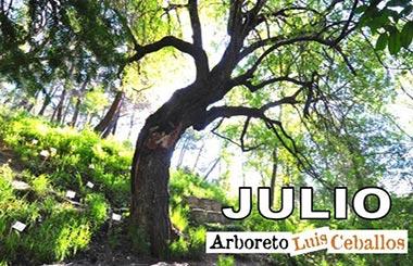 Actividades gratuitas en plena naturaleza para disfrutar en familia este mes de Julio