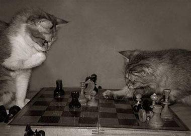 la gatoteca