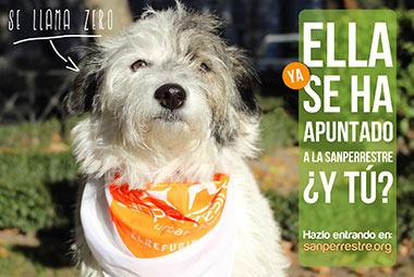 SanPerrestre 2013, ven a correr con tu perrito
