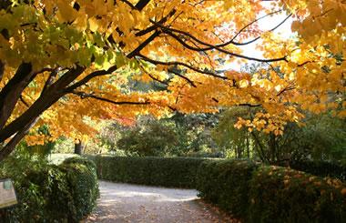 Visitas Guiadas Gratuitas al Jardín Botánico los fines de semana de Octubre