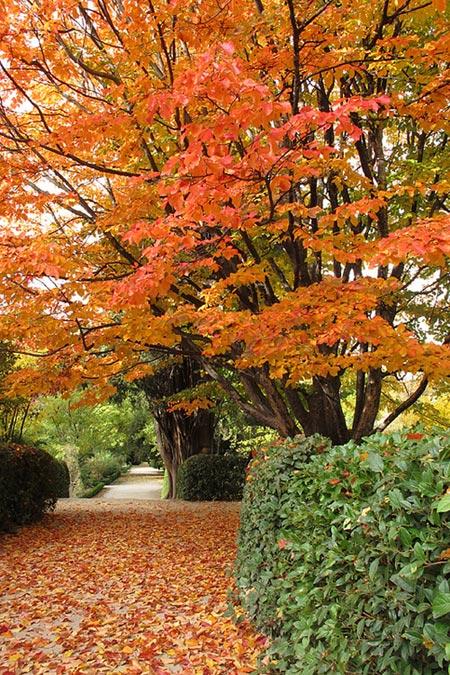 Visitas guiadas gratuitas al jard n bot nico los fines de for Precio de entrada al jardin botanico