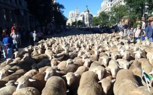 Trashumancia Madrid 2014