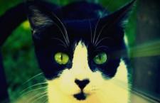 Jornada de Adopción de gatitos sábado 11 de abril