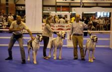 100×100 Mascota, Feria del Animal de Compañía Madrid 2015