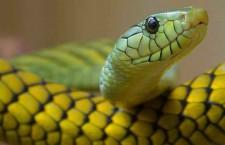 Expoterraria Madrid 2015 Feria Internacional de reptiles, anfibios, peces y artrópodos