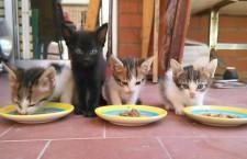 Jornada de Adopción de gatitos de AGAR