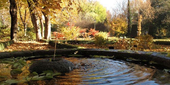 Un paseo nocturno por el real jard n bot nico de madrid y for Jardin botanico bogota nocturno 2016