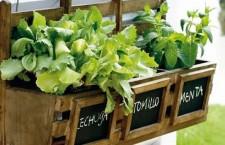 Curso Gratuito para el Cultivo de hortalizas en el balcón de casa