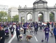 Perrotón Madrid 2016, corre con tu perro por una buena causa