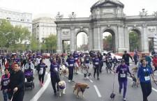 Perrotón Madrid 2019, corre con tu perro por una buena causa