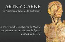 Figuras anatómicas de cera del Siglo XVIII de la Universidad Complutense de Madrid