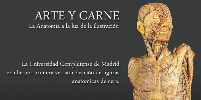 Figuras anatómicas de cera del Siglo XVIII de la Universidad ...