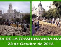 Fiesta de la Trashumancia Madrid, domingo 23 de octubre 2016
