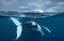 Exposición Wildlife Photographer of the Year 2016 en Madrid
