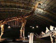 """Viaja a la época de los dinosaurios con la exposición """"Dinopétrea"""" en Alcalá de Henares"""