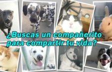 Jornadas de puertas abiertas del Centro de Protección Animal de Madrid