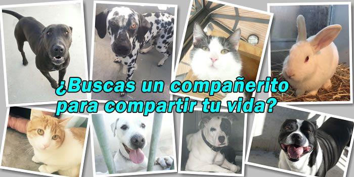 adopción mascotas madrid