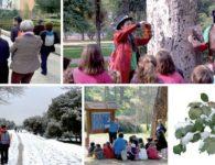 Hábitat Madrid, planes gratuitos para disfrutar del invierno en Madrid