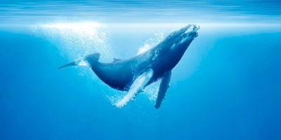 Impresionante exposición sobre el Océano en el Museo de Ciencias Naturales