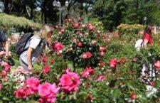 Especial San Isidro: Qué hacer en Madrid del 12 al 15 de mayo 2017