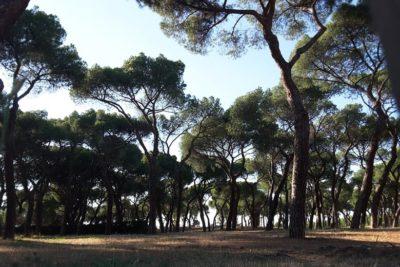 Interior de la Casa de Campo con pinares