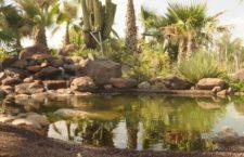 DesertCity, un precioso Jardín de Cactus en Madrid