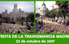 Fiesta de la Trashumancia Madrid, domingo 22 de octubre 2017