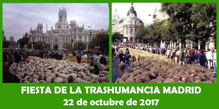 trashumancia-madrid-2017