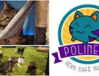 Polineko, nuevo café de gatos en Madrid