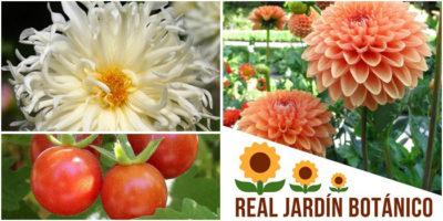 Verano en el Jardín, visitas guiadas al Real Jardín Botánico en julio y agosto 2018