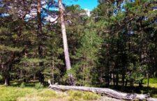 Rutas gratuitas a parajes naturales de Madrid. Julio 2018