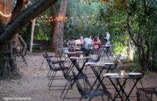 Olivar de Castillejo, cenas en un jardín de olivos centenarios