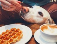 TheDoger Café, el primer café de perros en Madrid