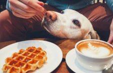theDoger Café, el café para perros de Madrid se traslada a Delicias