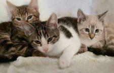 Jornadas de Adopción Felina en Espacio Vecinal Arganzuela (EVA)