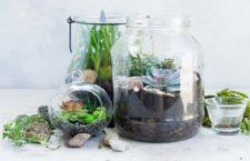 TALLERES EN MADRID: Aprende a crear un terrario de plantas suculentas (GRATIS)