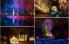 Luces de Navidad en el Jardín Botánico de Madrid y un mágico paseo nocturno