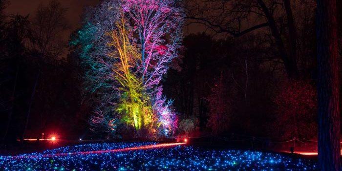 Entrada gratuita para ver las luces de Navidad del Jardín Botánico