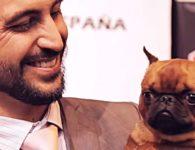 WORLD DOG SHOW MADRID. La exposición con los mejores perros del mundo