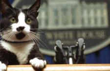 FESTIMIAU! Festival de gatos en La Gatoteca de Madrid