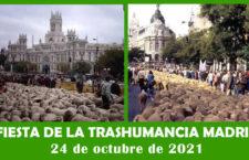 Fiesta de la Trashumancia Madrid 2021